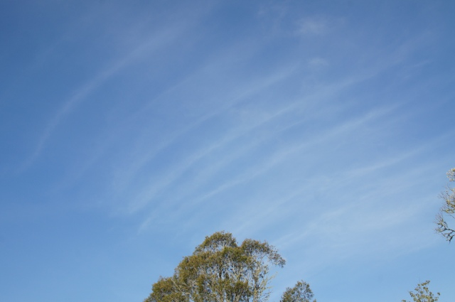 A sky thick with aerosol trails merging with one another over Northland on November the 1st. Taken from Whangarei.